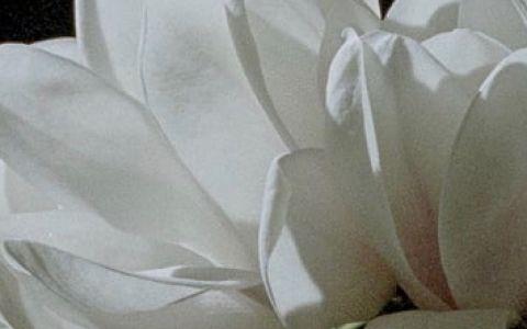 Afiche película The Oblique
